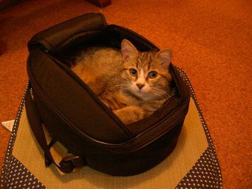 タンクバック猫